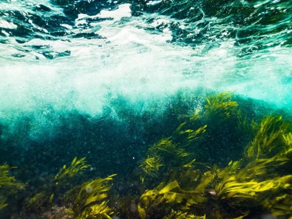 algen-emerald-4641424_1920