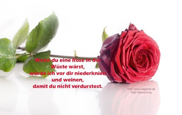 rose-mit-gedicht-3
